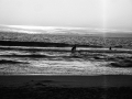 carcans 135, Nico M Photographe-2