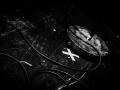 electro-deluxe-nico-m-photographe-18-55-org