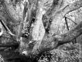 ile de groix 120, Nico M Photographe-10