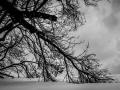 into the wild, Nico M Photographe-5