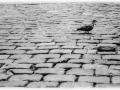 solitude-nico-m-photographe-4