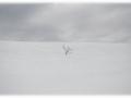 solitude-nico-m-photographe-8
